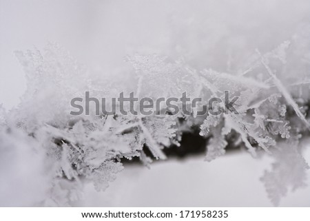 Details from a branch full of hoarfrost with natural background