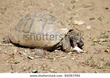 details of a Hermann's tortoise - stock photo