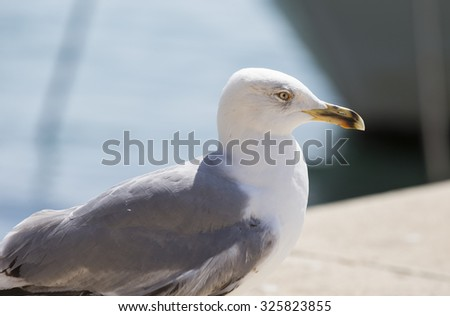 Details of a seagull. - stock photo