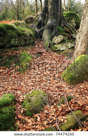 Details of above ground roots of a nearby beech tree in the forest. Rocky terrain in the Table ( Stolowe ) Mountains in Poland � National Park. Nature background.