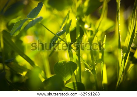 Details of bright green leaves with shallow depth of field, backlit by sun