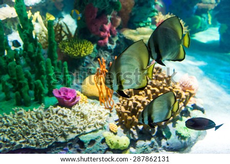 Details of fauna in the Coral Reef seen in Ripley's Aquarium. Coral reefs are underwater structures made from calcium carbonate secreted by corals. - stock photo