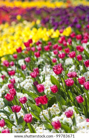 Details of flowerbed in perspective with shallow depth of field. - stock photo