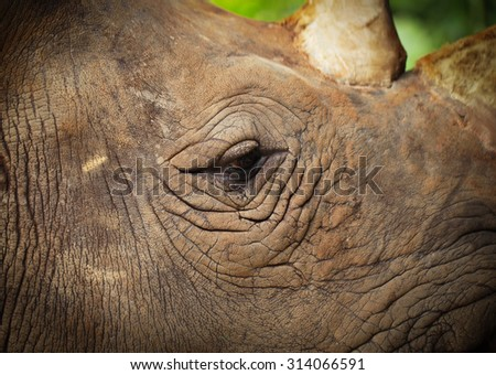 Details of rhinoceros eyes and skin.