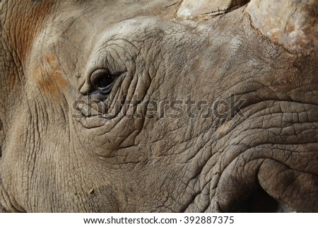 Details of rhinoceros eyes and skin