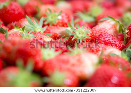 Details of strawberries in a box in a greenhouse in Breda, Netherlands, very fresh and standing ready for transport just  after harvesting - stock photo