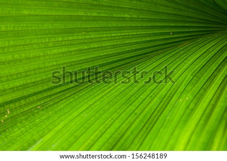Details of the leaf was photographed at close range - stock photo