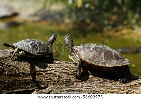 details of turtles on a branch