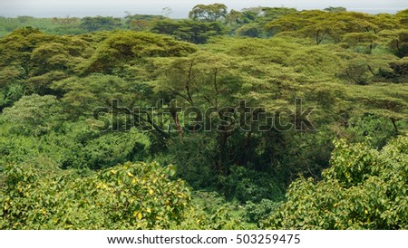 Details view of deep forest with trees in Uganda
