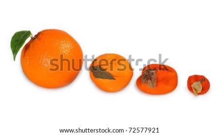 development of orange - stock photo