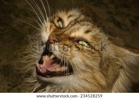 Devil Cat - stock photo