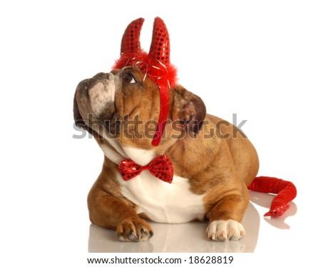 Devil Dog - stock photo