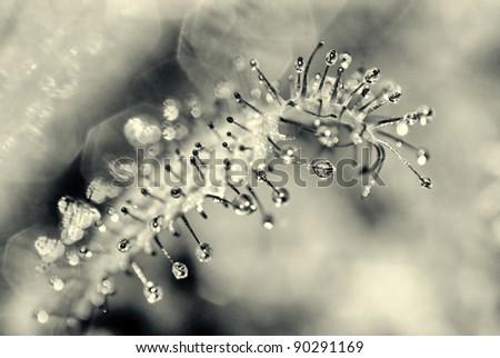 Dew - stock photo