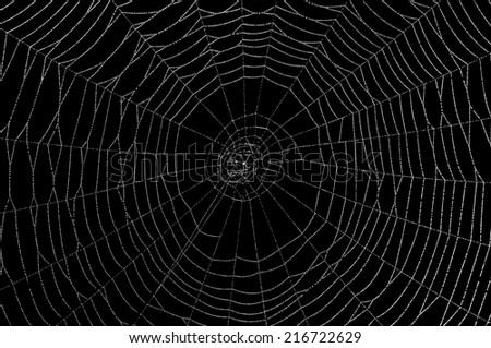 Dew collects on a spider web. - stock photo