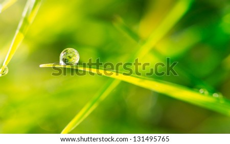 Dew drop on blade of grass close up