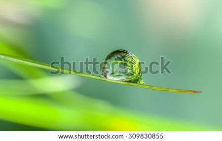 dew drop on green grass in nature.