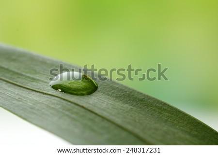 Dew drop on leaf on light background - stock photo
