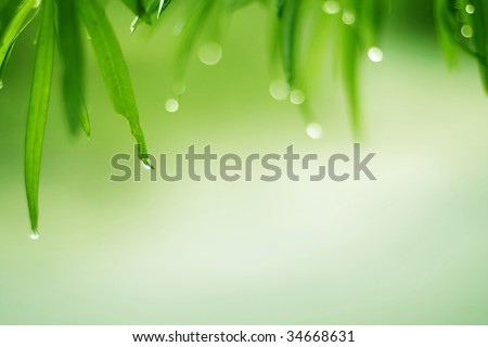 dew drops are on the green grass - stock photo