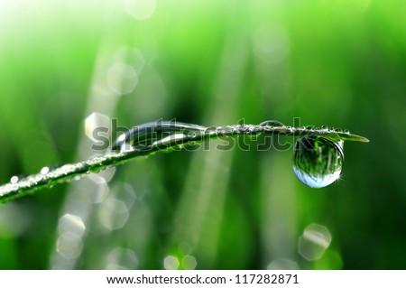 Dew drops close up - stock photo
