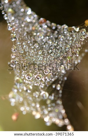 Dew drops in  a web of spider