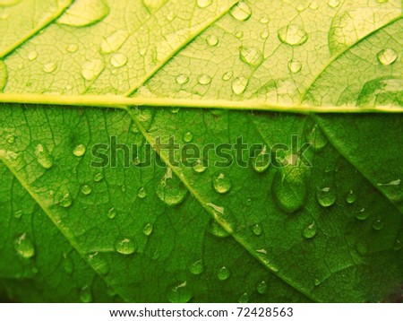 Dew drops on a green leaf. Invoice - stock photo