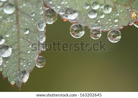 Dew drops on a leave - stock photo