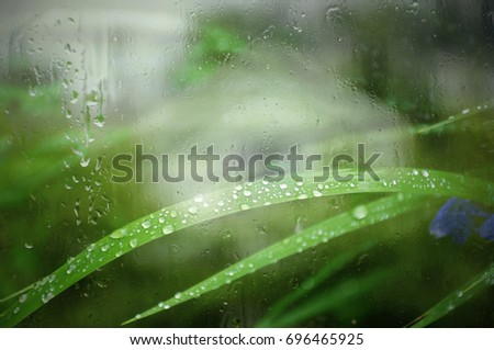 Dew drops on bright green grass, view through wet glass