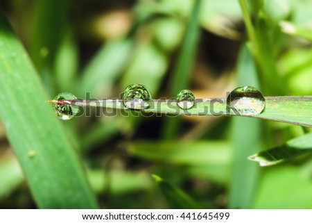 Dew drops on fresh green  grass leaves - stock photo