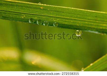 Dew drops on fresh green  grass leaves close up,  of change environment - stock photo