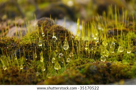 dew drops on grass - stock photo