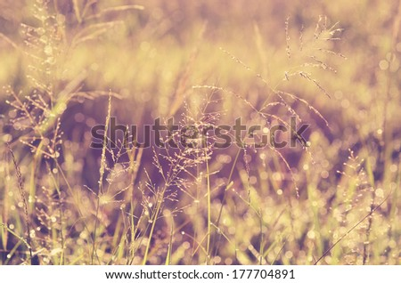 Dew drops on grass early in the morning, vintage look added - stock photo