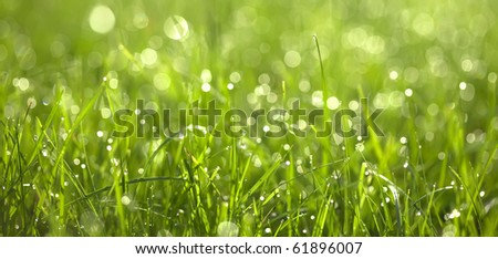 Dew drops on green graas. Close-up - stock photo