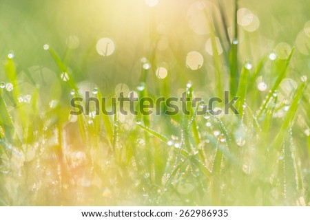 dew drops on green grass in the morning. - stock photo