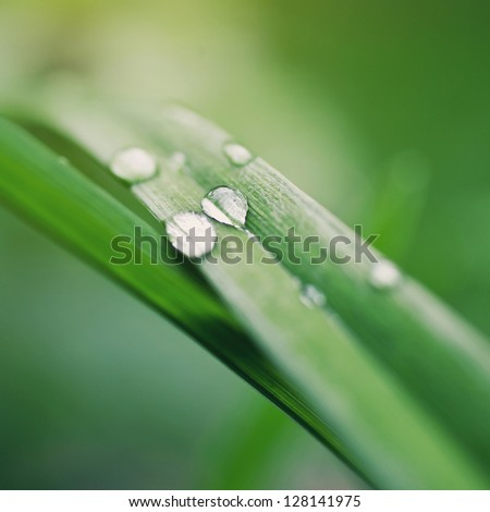 dew drops on the green grass