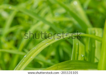 Dew on a grass in spring - stock photo