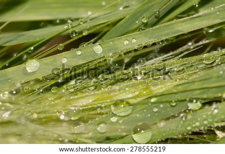 dew on grass - stock photo