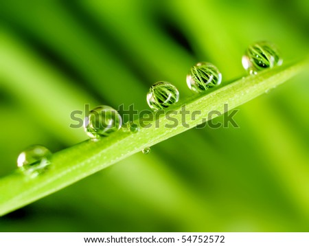 Dew on green blade grass. - stock photo