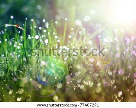 Dew on green grass under the morning sunlight - stock photo