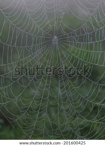 Dew on Spider web early morning