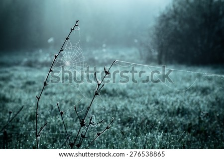 Dew on spiderweb, blue color toned image, morning concept - stock photo