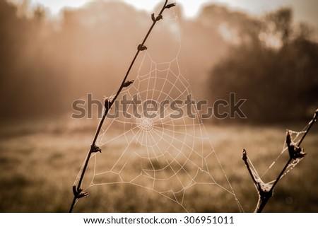 Dew on spiderweb closeup, sepia color toned image - stock photo