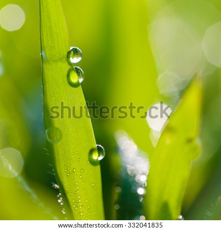 Dew on the grass in the morning. - stock photo