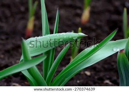 dew on the stems - stock photo