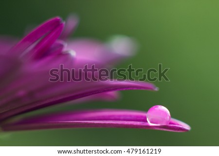 dewdrop on a pink flower