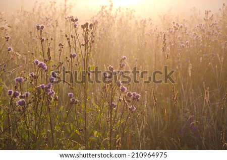 dewy beautiful summer morning grass and sunrise sunlight. Nature background - stock photo