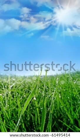 dewy grass - stock photo