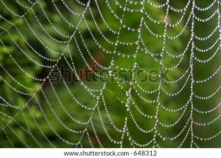 Dewy webs - stock photo