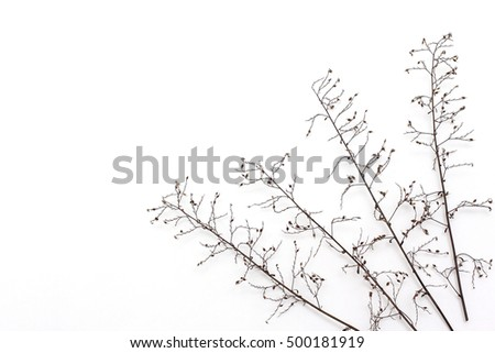 diagonal composition of dried flowers. on the right side.  white background
