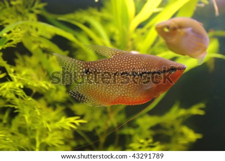 Dialogue of small fishes - stock photo