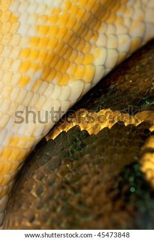 Diamond Python Morelia spilota skin detail shot - stock photo